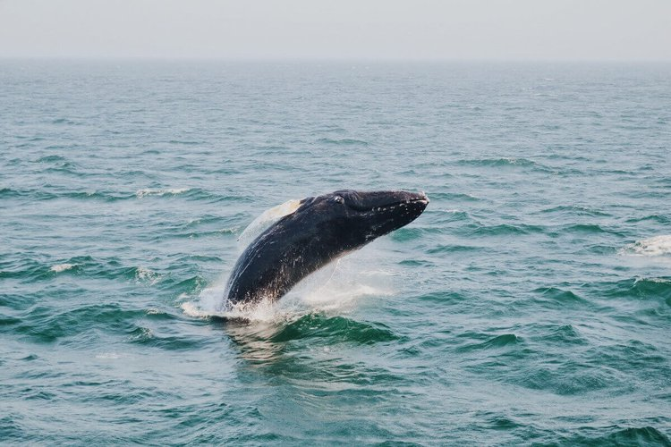 sailing-long-island-beach-whale-watching-sailo