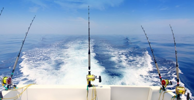 san-diego-fishing-charters-sailo