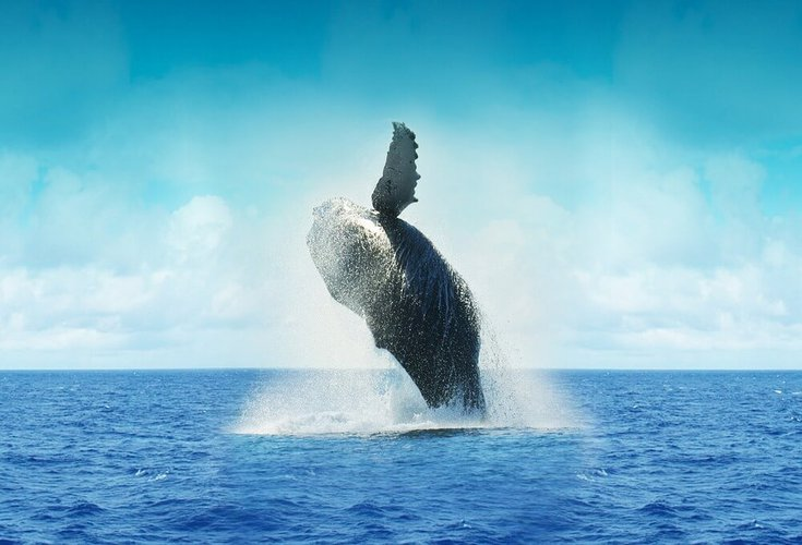 things-to-do-la-paz-mexico-whale-watching-sailo-boat-rental