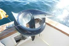 thumbnail-2 Henriques  44.0 feet, boat for rent in Belmar, NJ