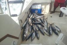 thumbnail-2 Tiara 36.0 feet, boat for rent in Nassau, BS