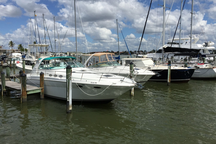 Cruiser boat rental in The Marina at Cape Harbour, FL