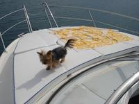 thumbnail-9 Bavaria Yachtbau 29.0 feet, boat for rent in Split region, HR