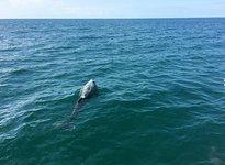 thumbnail-4 Jeanneau 40.0 feet, boat for rent in Clearwater, FL