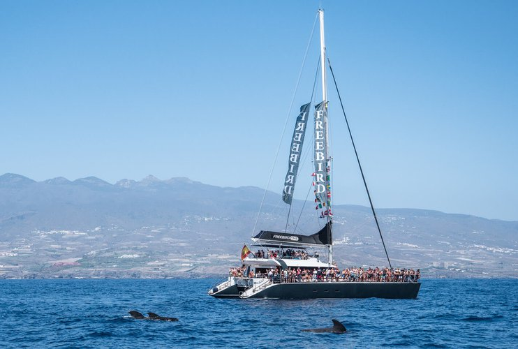 Boat rental in Tenerife,