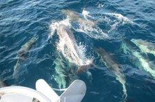 thumbnail-29 Hunter 41.0 feet, boat for rent in Marina del Rey, CA
