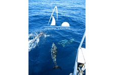 thumbnail-7 Beneteau 25.7 feet, boat for rent in Belem, PT