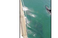 thumbnail-38 Greenline 48.0 feet, boat for rent in Setubal, PT