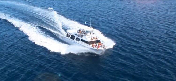 Charter this amazing motor boat in Port Douglas