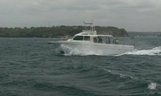 Discover Rose Bay surroundings on this MV Sea Eagle boat