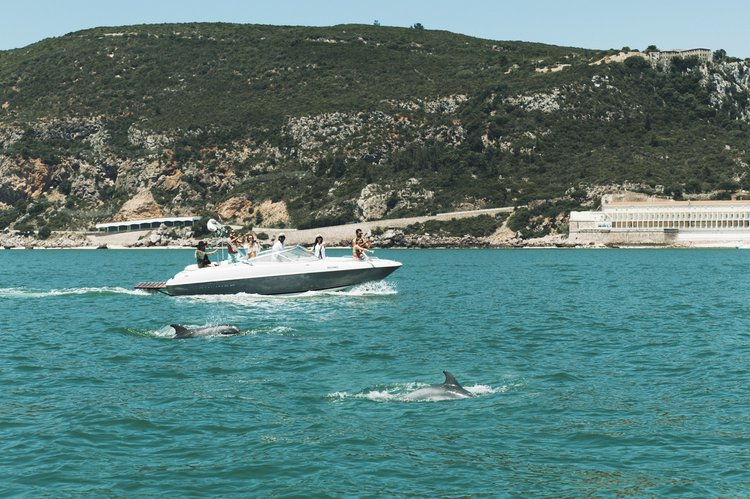 Discover Setubal surroundings on this 2350 SS Bayliner boat