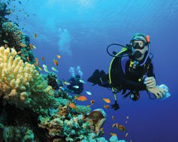 Dive boat boat rental in Hamilton, Bermuda