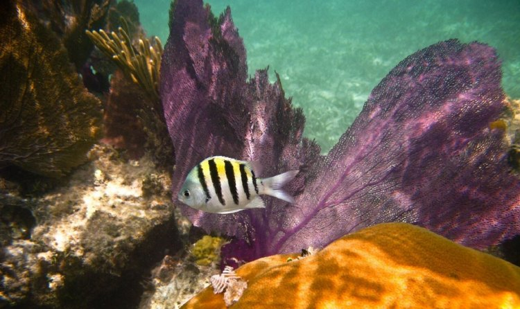 boat-charters-usvi-Underwater-National-Park