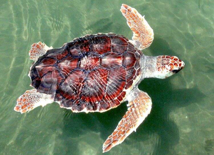 yacht-charter-bodrum-turtle-beach